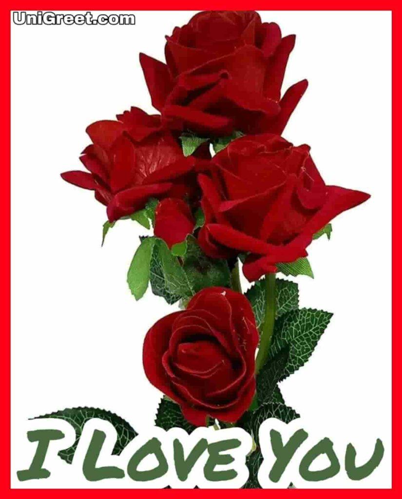 Beautiful I Love You Roses Images Photo Pics Wallpaper Download