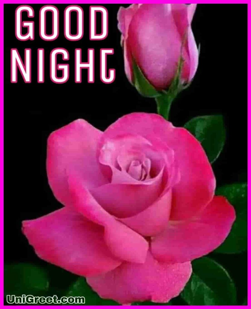Beautiful good night pink rose photo
