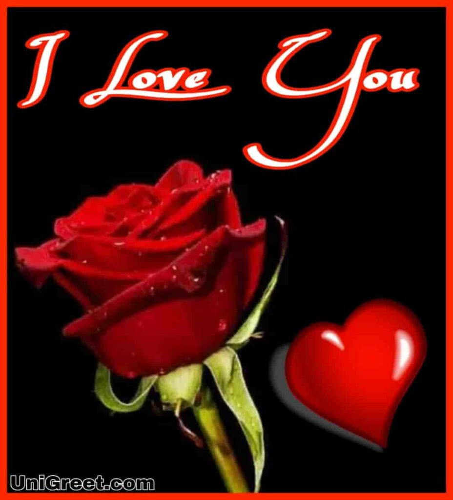Top 55 Beautiful I Love You Roses Images Photo Pics