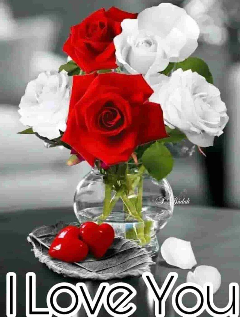 Love you rose romantic