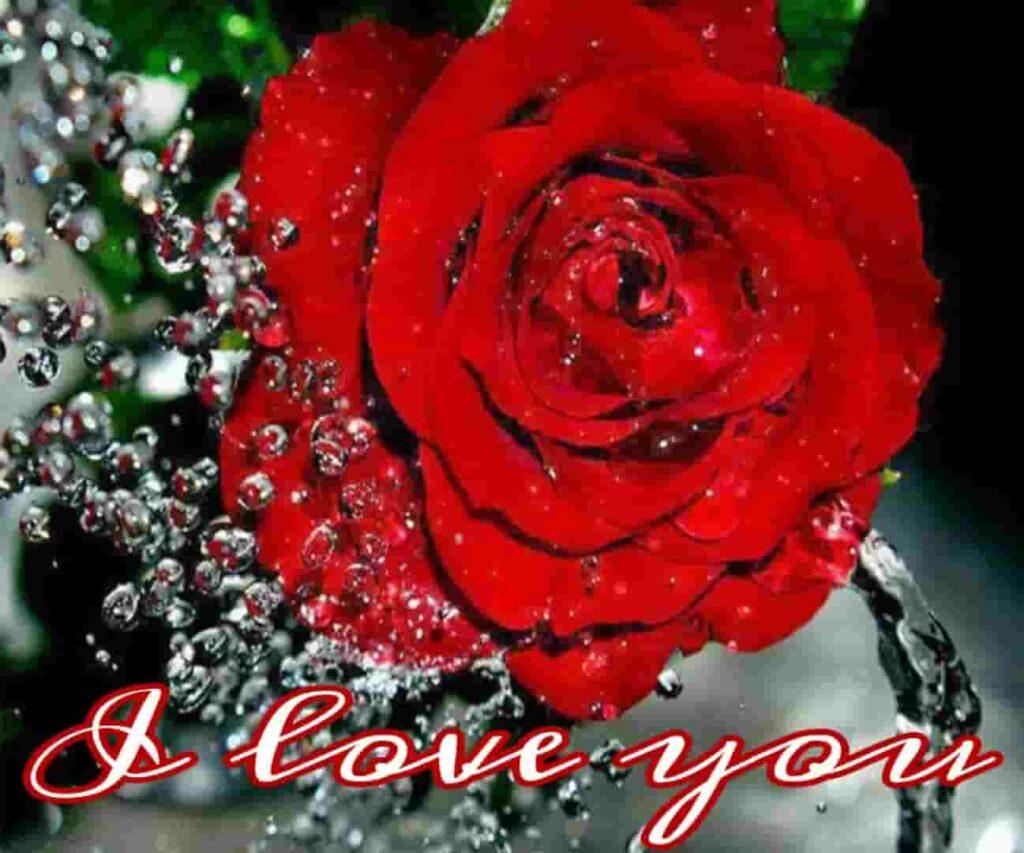 Red rose love u pic download