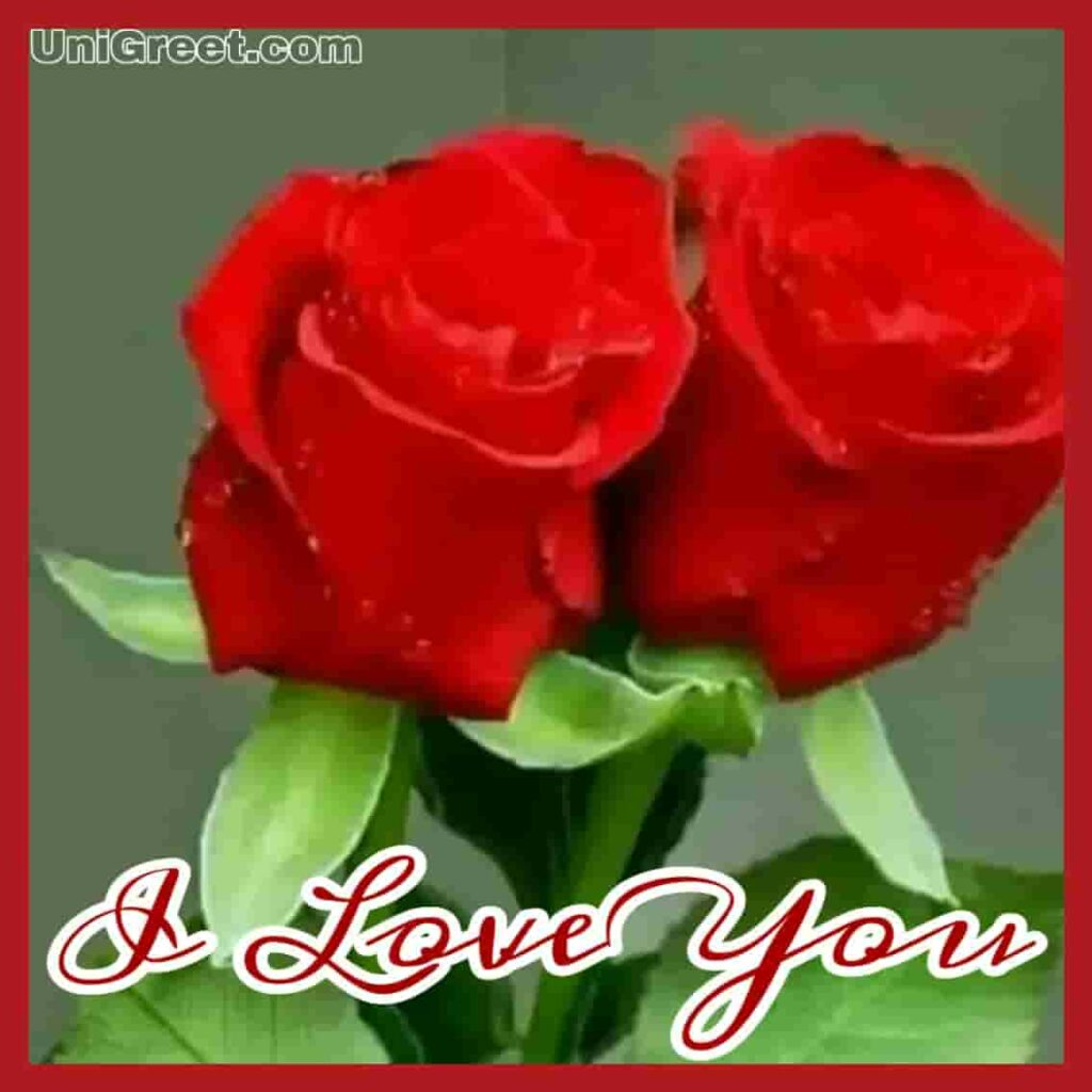 rose image with i love you download