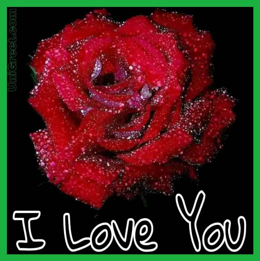I love you red rose images free download