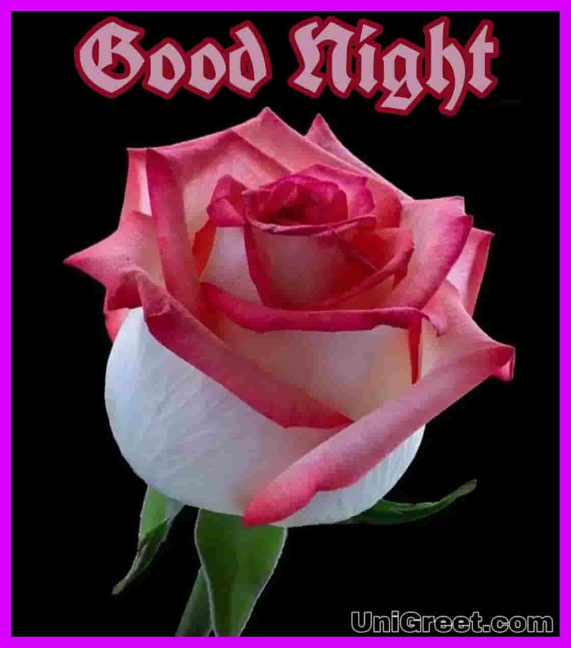 Top 50 Good Night Rose Images Photos Shayari Pics Status Pictures