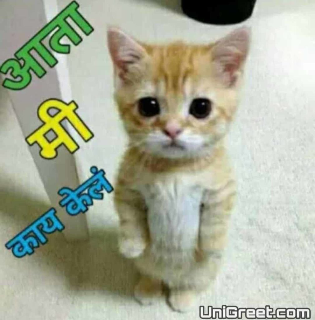 cat images in marathi for whatsApp